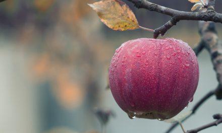 Aroma – Æbletræ