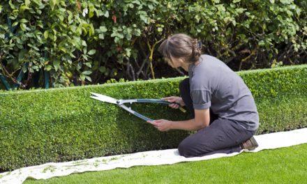 Smerter fra havearbejdet? Få smerten lindret med cannabis-olie