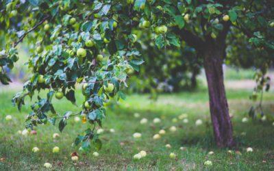 Find det rigtige træ til haven