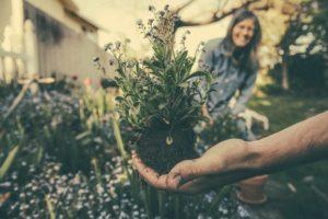 Havearbejde er nemmere med CBD