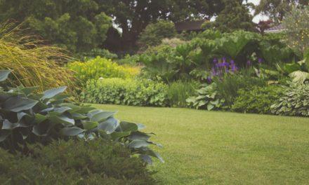 Sådan får du råd til den perfekte have
