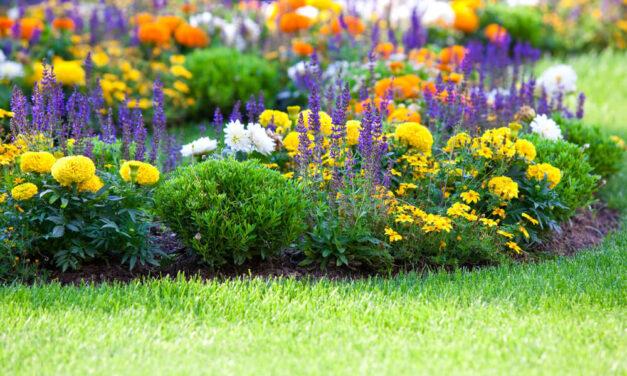 Regnbed i haven – sådan gør du trin for trin