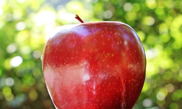Sådan får du et stort æbletræ til haven