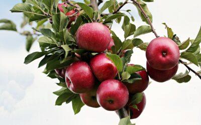 Et æbletræ er ikke bare et æbletræ
