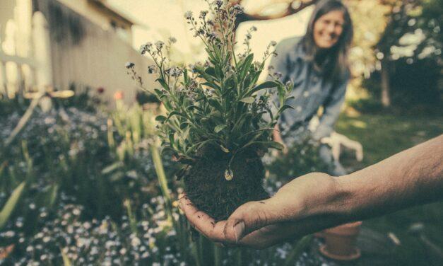 Undgå tandpine, når du skal passe din have