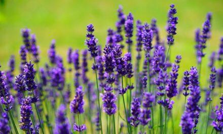 Gør haven sommerklar – plæne, bevoksning og bed