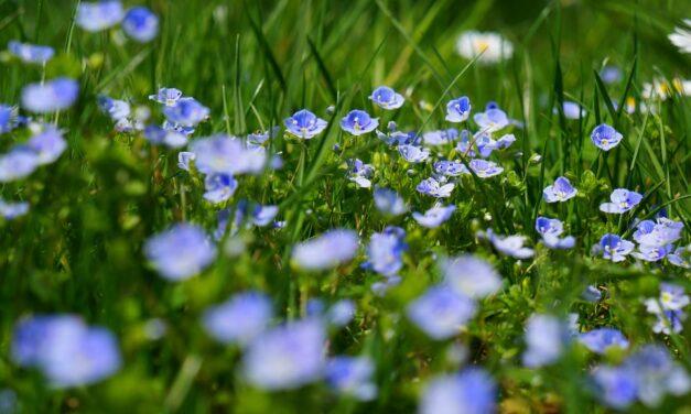Gode tips til at gøre haven klar til sommer