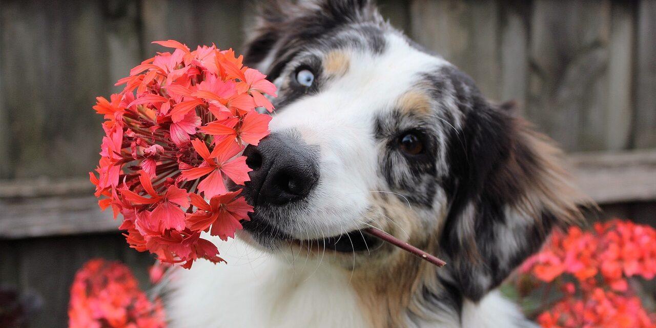 Hund og have – sådan gør du
