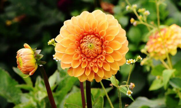 Placer dine planter rigtigt og få en pæn have