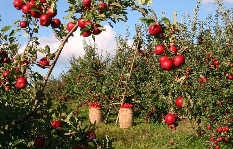 have med frugt
