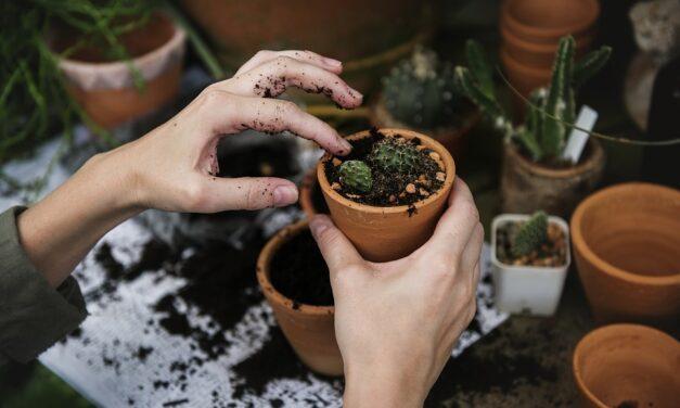 Her kan du spare penge på alt til haven