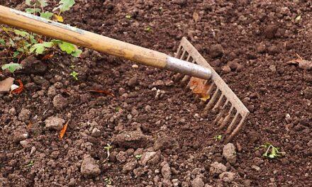 Skal haven laves om? Gør-det-selv eller udlicitering?
