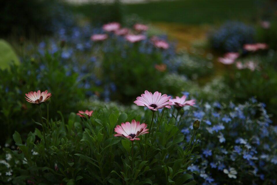 Mangler du inspiration til haven?