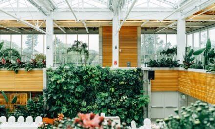 Sådan indretter du dit drivhus som orangeri