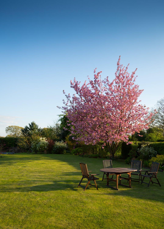 Forår-i-haven