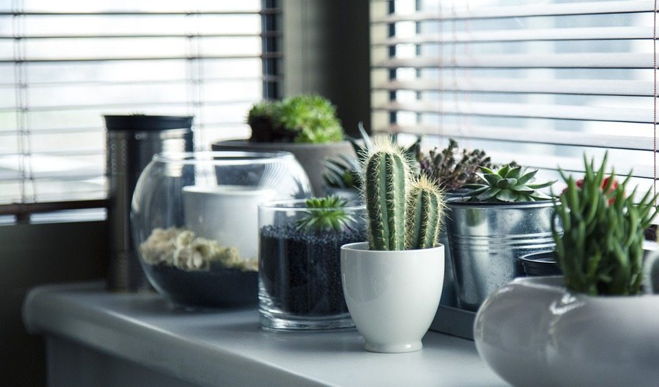 Vindueskarm med planter