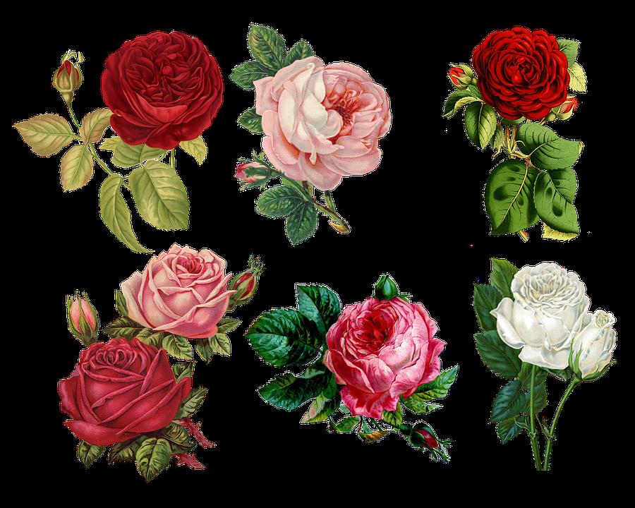 Flotte roser