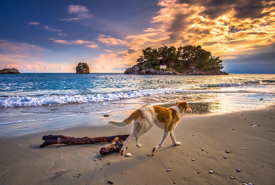 Hund ved havet