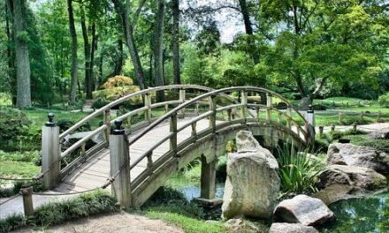 Sådan får du råd til den smukkeste have