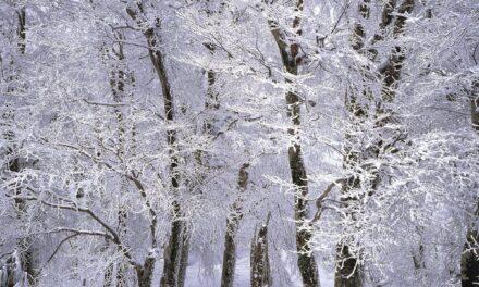 Brug haven i vinterhalvåret