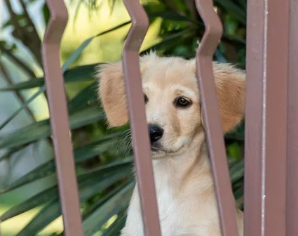 Hund bag hegn