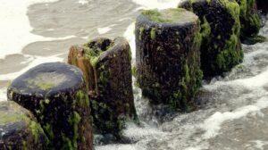 alger-i-vandet