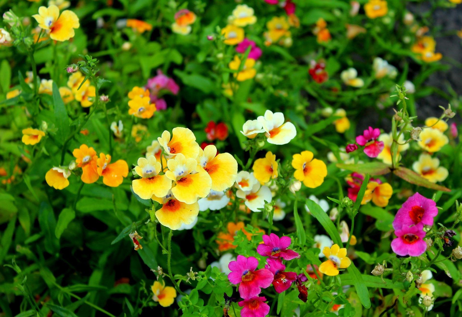 Farverige blomster