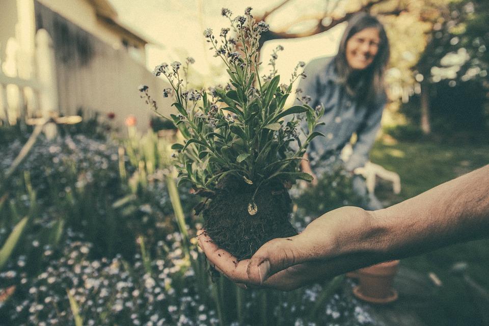 Gå i haven med venner og familie