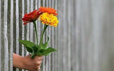 Giv manden blomster på valentinsdag