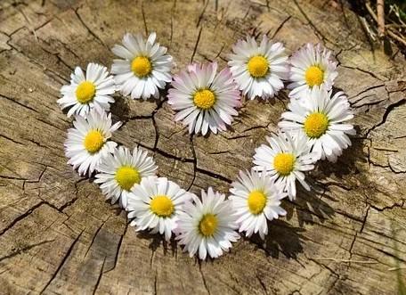 Blomsterkærlighed