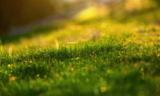 Savner du mere natur, end hvad din have kan give dig?