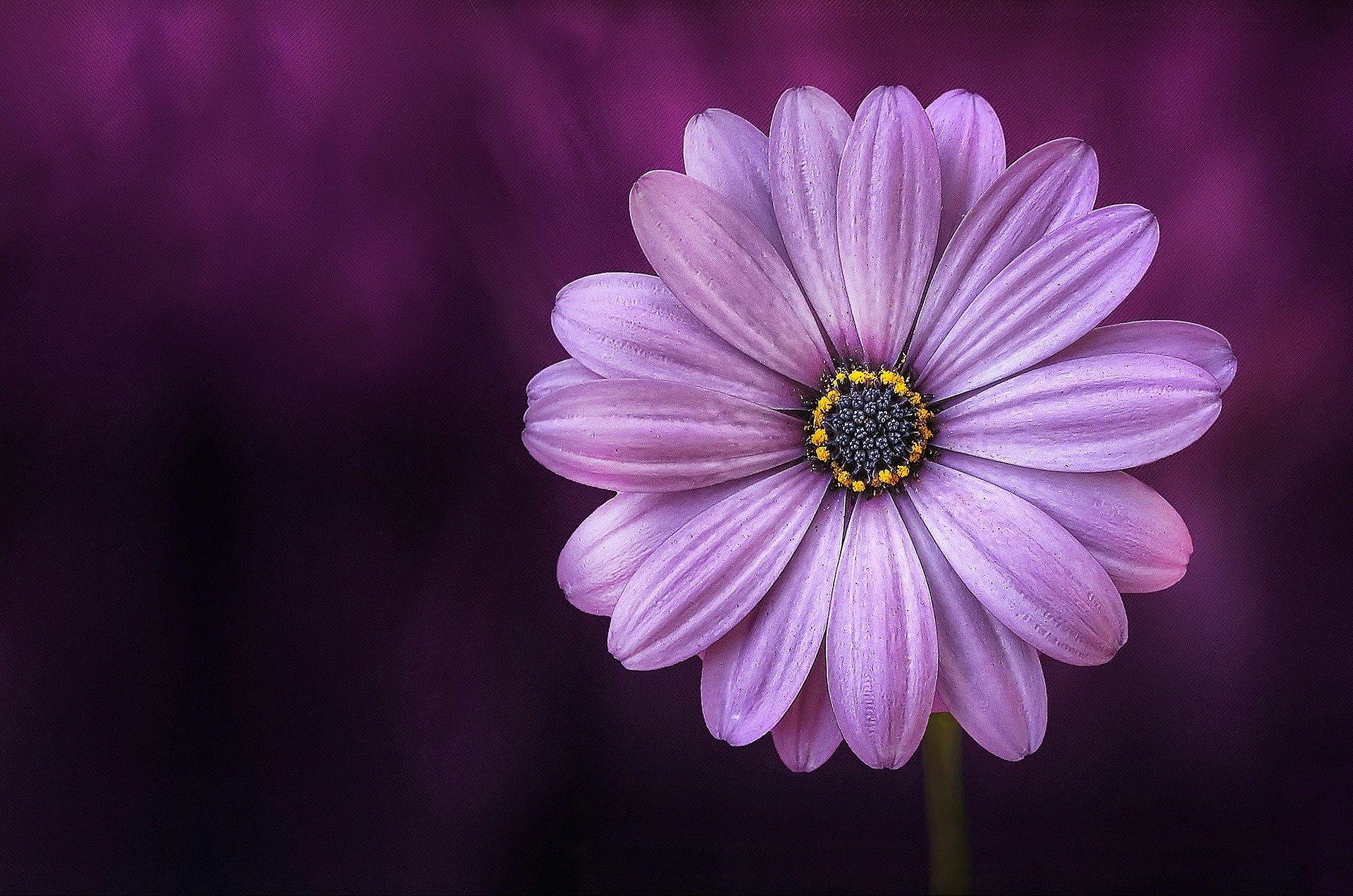 Pæne blomster