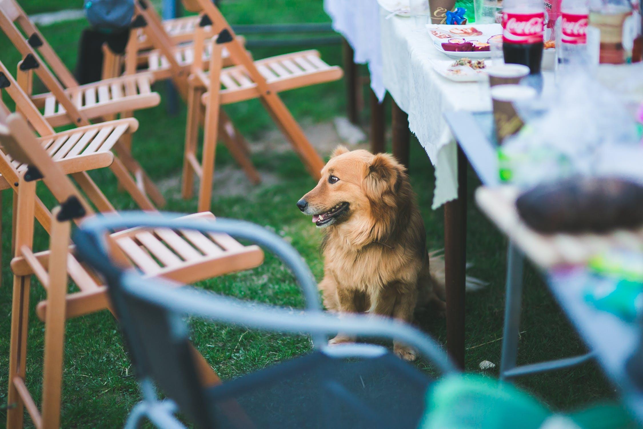 Hund og havefest