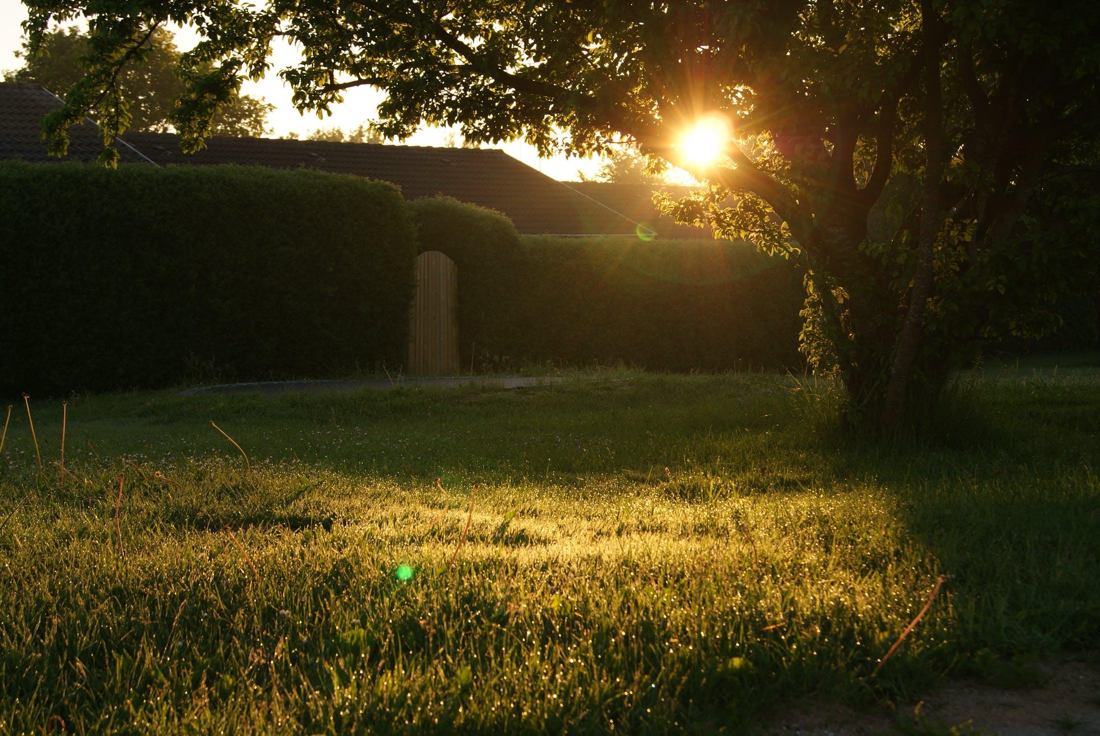 Solskin-sommer