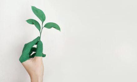 Find på en gave til din ven med grønne fingre