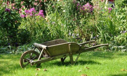 Sådan får du en endnu smukkere have