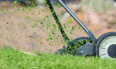 Få en ny græsplæne med billigt rullegræs
