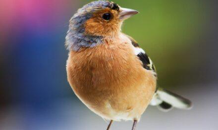 Fugle skaber skønt liv i haven