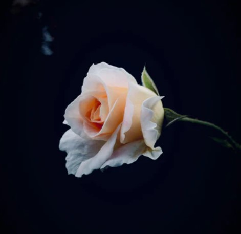 Vælg de rette blomster til begravelsen